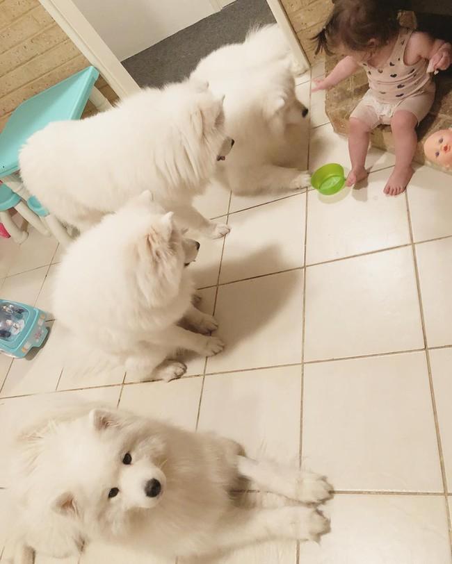Gia đình nổi như cồn trên mạng xã hội với loạt ảnh chụp hai chị em và cả đàn chó cưng trắng như tuyết - Ảnh 12.