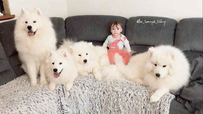 Gia đình nổi như cồn trên mạng xã hội với loạt ảnh chụp hai chị em và cả đàn chó cưng trắng như tuyết - Ảnh 16.