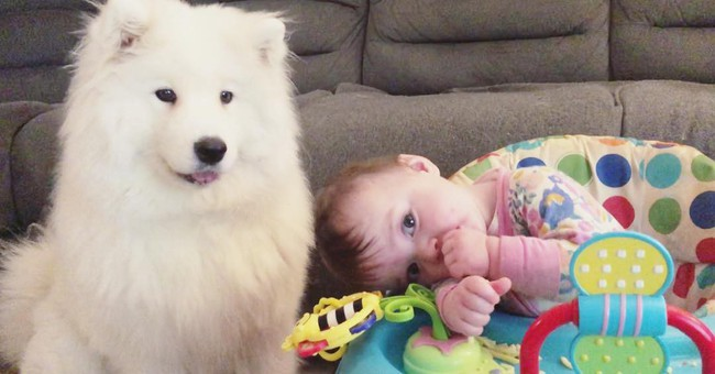 Gia đình nổi như cồn trên mạng xã hội với loạt ảnh chụp hai chị em và cả đàn chó cưng trắng như tuyết - Ảnh 7.