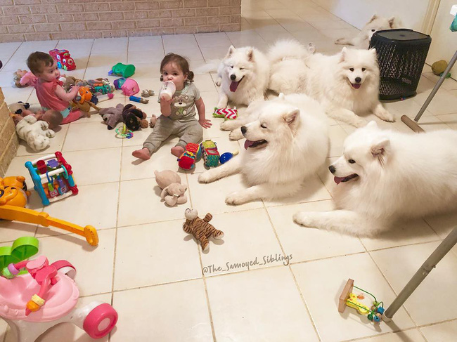 Gia đình nổi như cồn trên mạng xã hội với loạt ảnh chụp hai chị em và cả đàn chó cưng trắng như tuyết - Ảnh 11.