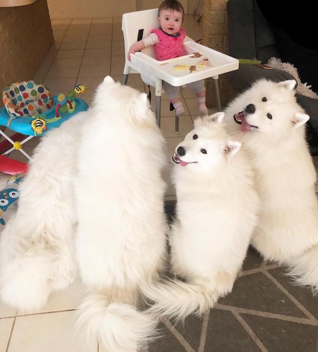 Gia đình nổi như cồn trên mạng xã hội với loạt ảnh chụp hai chị em và cả đàn chó cưng trắng như tuyết - Ảnh 18.