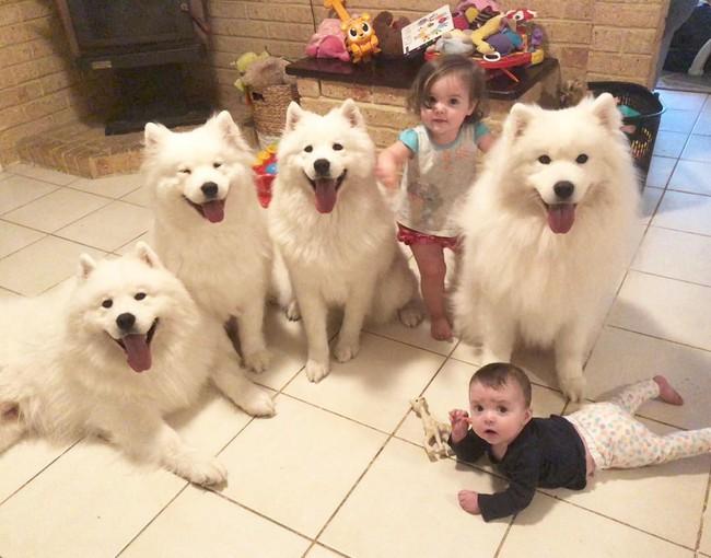 Gia đình nổi như cồn trên mạng xã hội với loạt ảnh chụp hai chị em và cả đàn chó cưng trắng như tuyết - Ảnh 19.