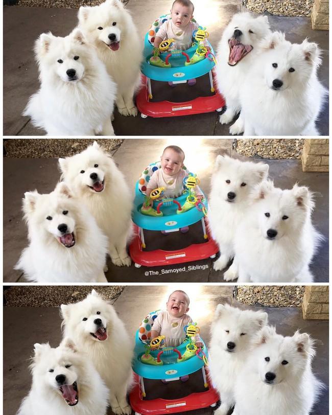 Gia đình nổi như cồn trên mạng xã hội với loạt ảnh chụp hai chị em và cả đàn chó cưng trắng như tuyết - Ảnh 2.