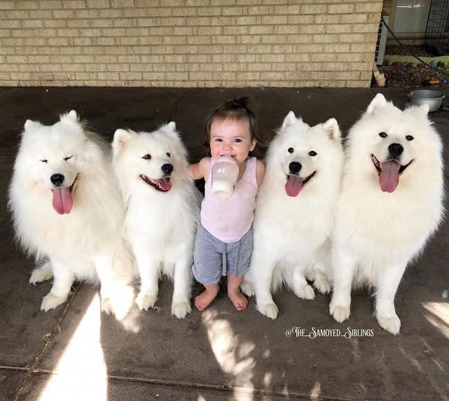 Gia đình nổi như cồn trên mạng xã hội với loạt ảnh chụp hai chị em và cả đàn chó cưng trắng như tuyết - Ảnh 5.