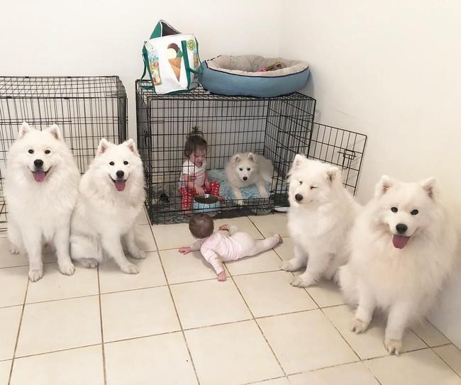Gia đình nổi như cồn trên mạng xã hội với loạt ảnh chụp hai chị em và cả đàn chó cưng trắng như tuyết - Ảnh 9.