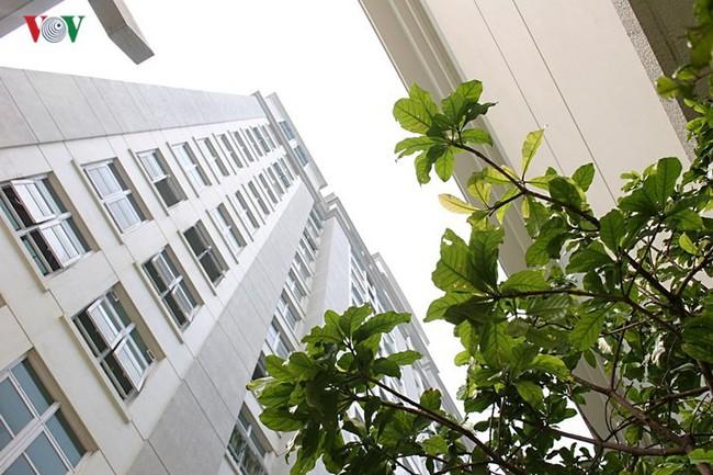 Căn hộ tầng 7 tận dụng khoảng không làm vườn treo - Ảnh 12.