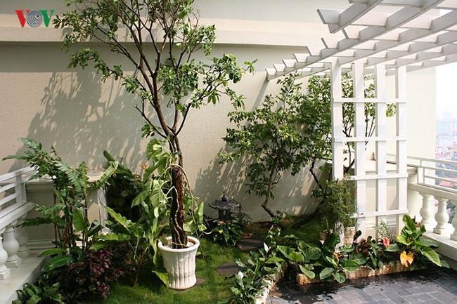 Căn hộ tầng 7 tận dụng khoảng không làm vườn treo - Ảnh 13.