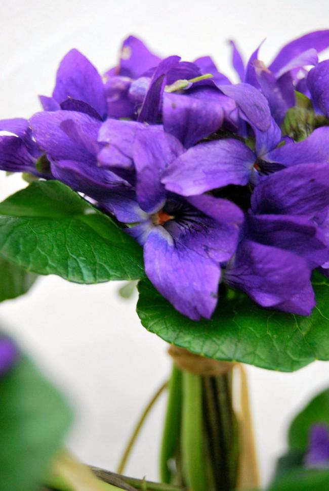 Cách cắm hoa Violet dễ ợt ai cũng có thể tự tay làm được để trang trí nhà đón Tết - Ảnh 5.