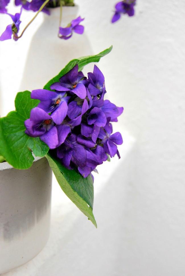 Cách cắm hoa Violet dễ ợt ai cũng có thể tự tay làm được để trang trí nhà đón Tết - Ảnh 7.