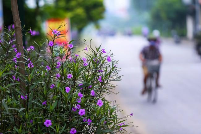 Người Hà Nội thích thú với con đường hoa chiều tím dài hơn 1km vô cùng thơ mộng ven sông Tô Lịch - Ảnh 8.