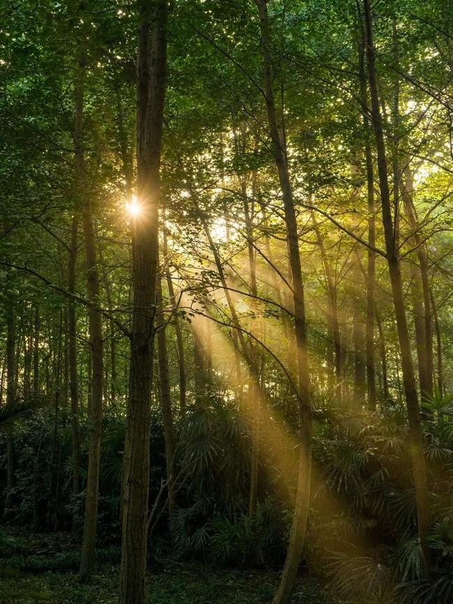 Cuộc sống ngỡ như là mơ của gia đình sống trong ngôi nhà gỗ 400m² bên khu rừng rộng 30 mẫu sau khi quyết tâm rời bỏ thành phố - Ảnh 8.