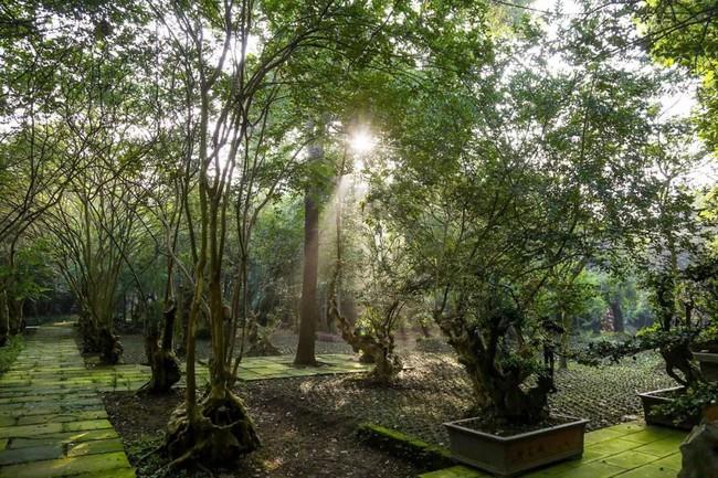 Cuộc sống ngỡ như là mơ của gia đình sống trong ngôi nhà gỗ 400m² bên khu rừng rộng 30 mẫu sau khi quyết tâm rời bỏ thành phố - Ảnh 3.
