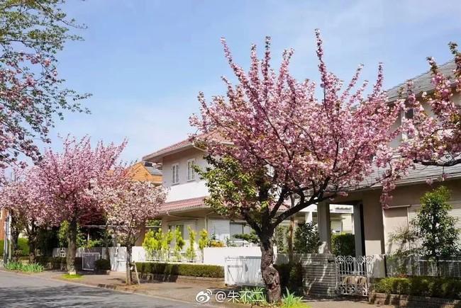 Ngôi nhà nhỏ lãng mạn của đôi vợ chồng trẻ từ bỏ cuộc sống ở Tokyo, Nhật Bản để về ngoại ô sinh sống - Ảnh 3.