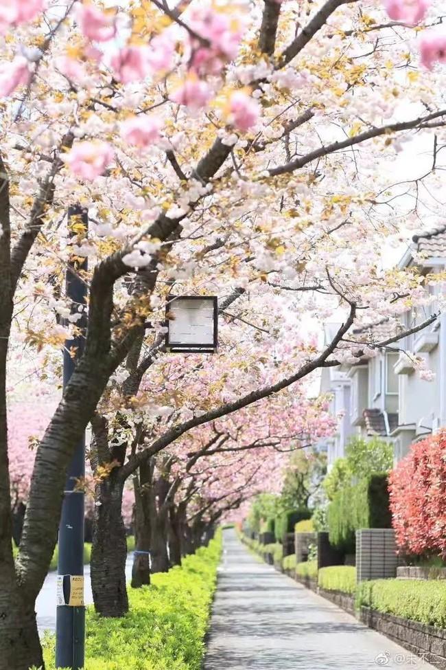 Ngôi nhà nhỏ lãng mạn của đôi vợ chồng trẻ từ bỏ cuộc sống ở Tokyo, Nhật Bản để về ngoại ô sinh sống - Ảnh 2.