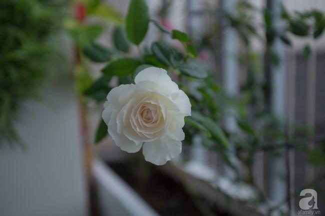 Căn hộ 88,5m² vô cùng ấm cúng được hoàn thiện bằng tất cả tâm huyết của cặp vợ chồng thích trồng hoa và đọc sách ở Hà Nội - Ảnh 30.