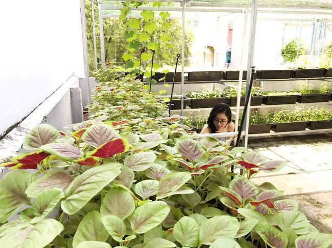 Khu vườn trên sân thượng nhỏ nhắn nhưng xanh mát mắt của bà mẹ hai con xinh đẹp Elly Trần - Ảnh 2.
