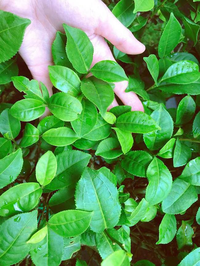 Khu vườn trên sân thượng nhỏ nhắn nhưng xanh mát mắt của bà mẹ hai con xinh đẹp Elly Trần - Ảnh 12.