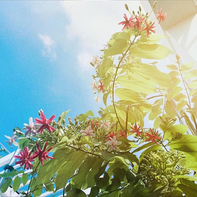 Khu vườn trên sân thượng nhỏ nhắn nhưng xanh mát mắt của bà mẹ hai con xinh đẹp Elly Trần - Ảnh 16.