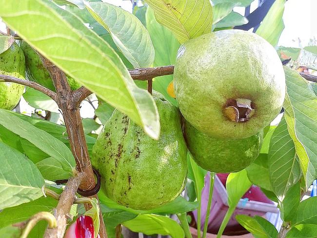 Khu vườn trên sân thượng nhỏ nhắn nhưng xanh mát mắt của bà mẹ hai con xinh đẹp Elly Trần - Ảnh 9.