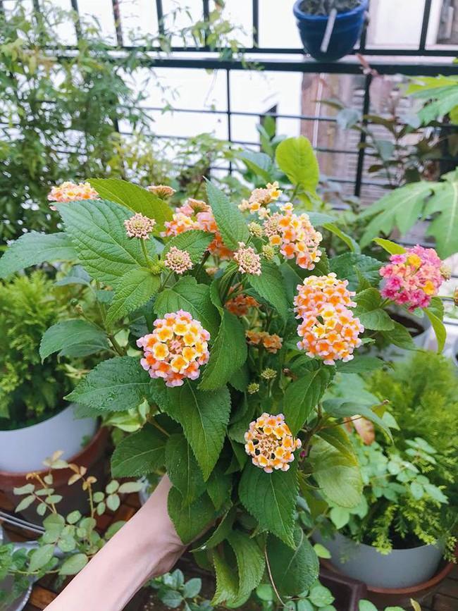 Khu vườn trên sân thượng nhỏ nhắn nhưng xanh mát mắt của bà mẹ hai con xinh đẹp Elly Trần - Ảnh 15.