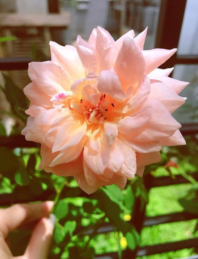 Khu vườn trên sân thượng nhỏ nhắn nhưng xanh mát mắt của bà mẹ hai con xinh đẹp Elly Trần - Ảnh 14.