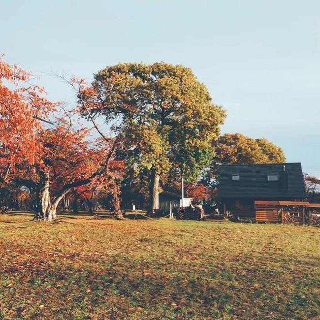 Cuộc sống yên bình bên ngôi nhà gỗ của gia đình 4 người ở vùng nông thôn Nhật Bản - Ảnh 1.