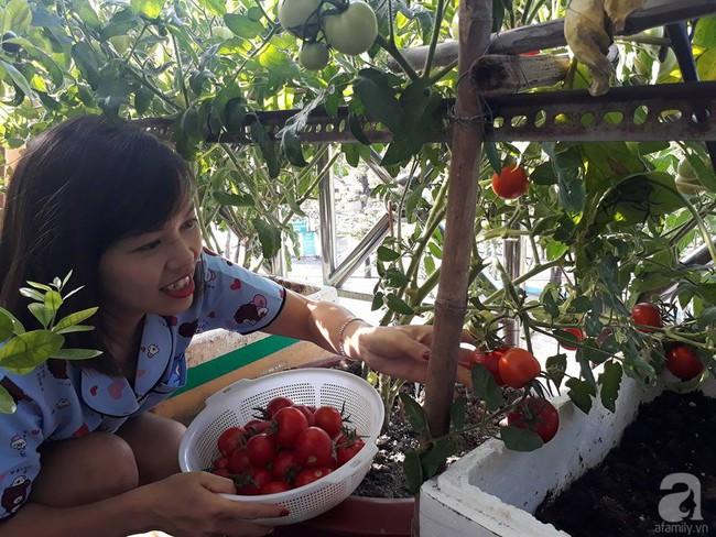Khu vườn sân thượng tuy nhỏ nhưng bạt ngàn rau sạch của người chồng dồn sức chăm bón cho vợ con ở Vũng Tàu - Ảnh 15.