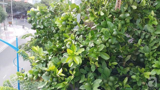 Khu vườn sân thượng tuy nhỏ nhưng bạt ngàn rau sạch của người chồng dồn sức chăm bón cho vợ con ở Vũng Tàu - Ảnh 6.