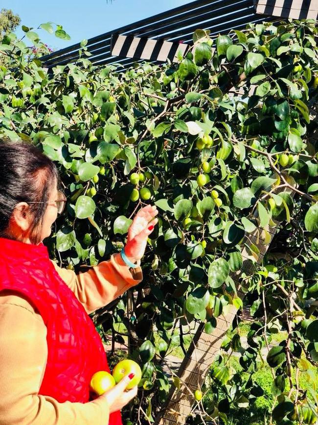 Khu vườn đủ các loại cây quả mang hương vị quê nhà của ca sĩ Bằng Kiều ở Mỹ - Ảnh 5.