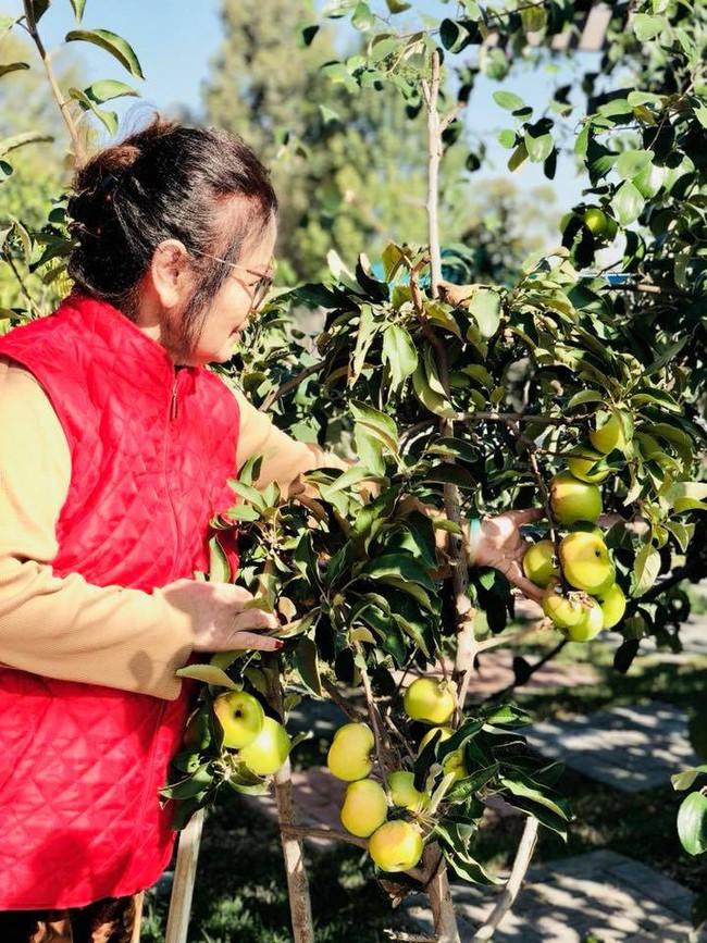 Khu vườn đủ các loại cây quả mang hương vị quê nhà của ca sĩ Bằng Kiều ở Mỹ - Ảnh 8.