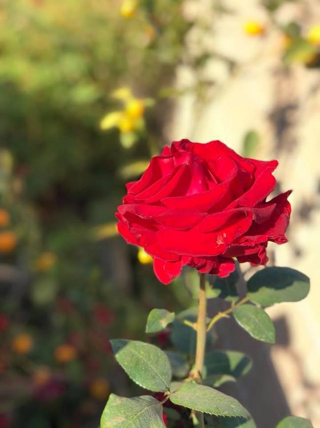 Khu vườn đủ các loại cây quả mang hương vị quê nhà của ca sĩ Bằng Kiều ở Mỹ - Ảnh 23.
