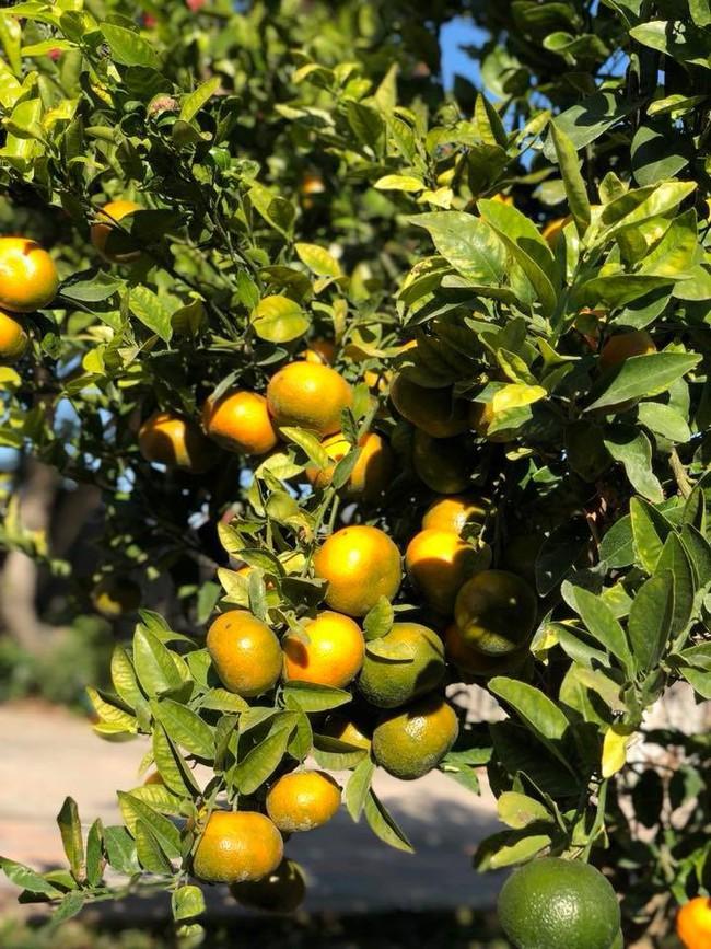 Khu vườn đủ các loại cây quả mang hương vị quê nhà của ca sĩ Bằng Kiều ở Mỹ - Ảnh 12.