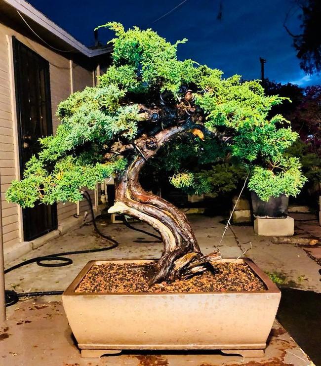 Khu vườn đủ các loại cây quả mang hương vị quê nhà của ca sĩ Bằng Kiều ở Mỹ - Ảnh 16.