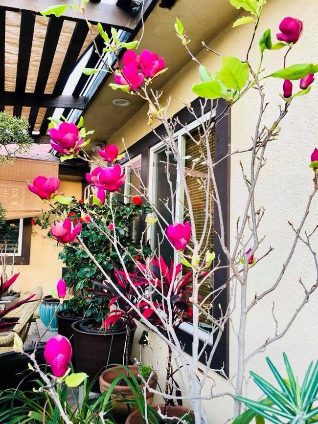 Khu vườn đủ các loại cây quả mang hương vị quê nhà của ca sĩ Bằng Kiều ở Mỹ - Ảnh 22.