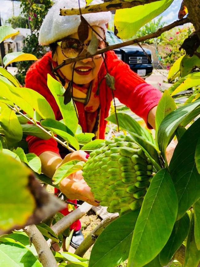 Khu vườn đủ các loại cây quả mang hương vị quê nhà của ca sĩ Bằng Kiều ở Mỹ - Ảnh 9.
