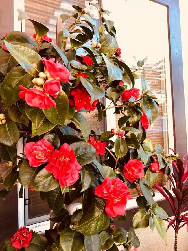 Khu vườn đủ các loại cây quả mang hương vị quê nhà của ca sĩ Bằng Kiều ở Mỹ - Ảnh 19.