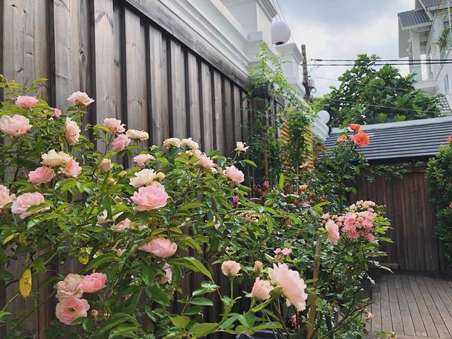 Khu vườn nhỏ xanh mát với rau sạch và hoa hồng trong biệt thự triệu đô của Tăng Thanh Hà - Ảnh 2.
