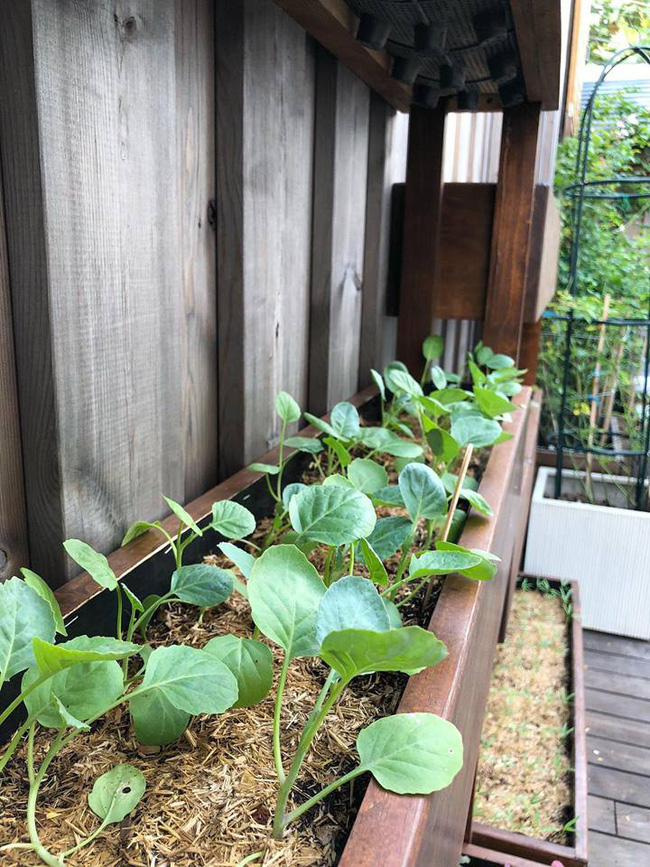 Khu vườn nhỏ xanh mát với rau sạch và hoa hồng trong biệt thự triệu đô của Tăng Thanh Hà - Ảnh 12.