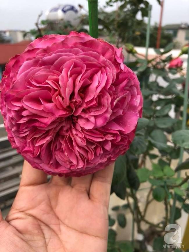 Người phụ nữ tận hưởng hạnh phúc trọn vẹn bên vườn hồng trên cao giữa lòng Hà Nội - Ảnh 9.