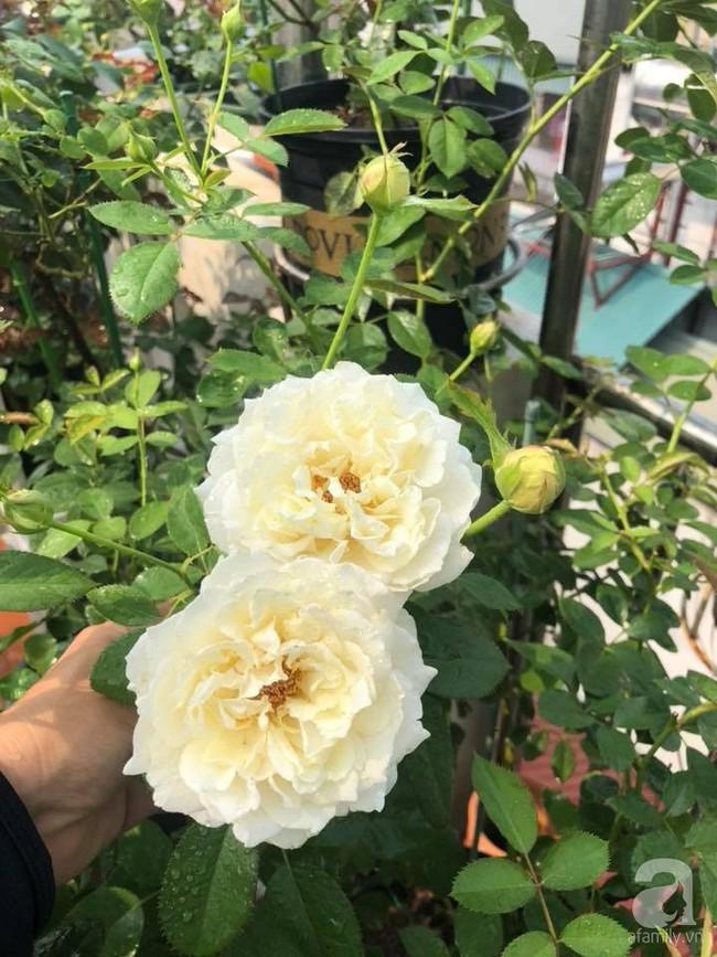 Người phụ nữ tận hưởng hạnh phúc trọn vẹn bên vườn hồng trên cao giữa lòng Hà Nội - Ảnh 7.