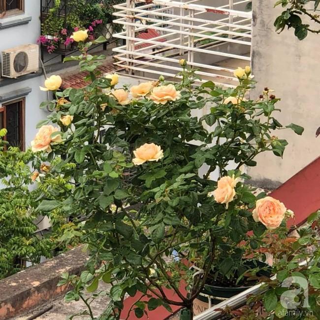 Người phụ nữ tận hưởng hạnh phúc trọn vẹn bên vườn hồng trên cao giữa lòng Hà Nội - Ảnh 5.