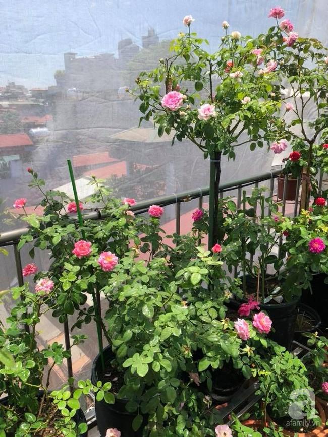 Người phụ nữ tận hưởng hạnh phúc trọn vẹn bên vườn hồng trên cao giữa lòng Hà Nội - Ảnh 3.