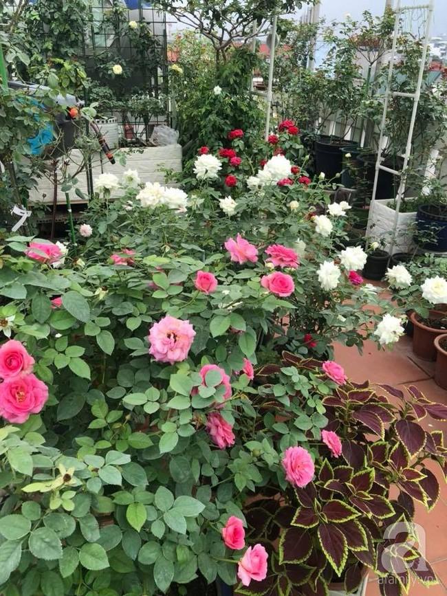 Người phụ nữ tận hưởng hạnh phúc trọn vẹn bên vườn hồng trên cao giữa lòng Hà Nội - Ảnh 19.