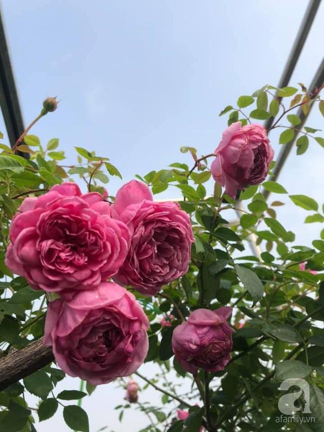 Người phụ nữ tận hưởng hạnh phúc trọn vẹn bên vườn hồng trên cao giữa lòng Hà Nội - Ảnh 14.