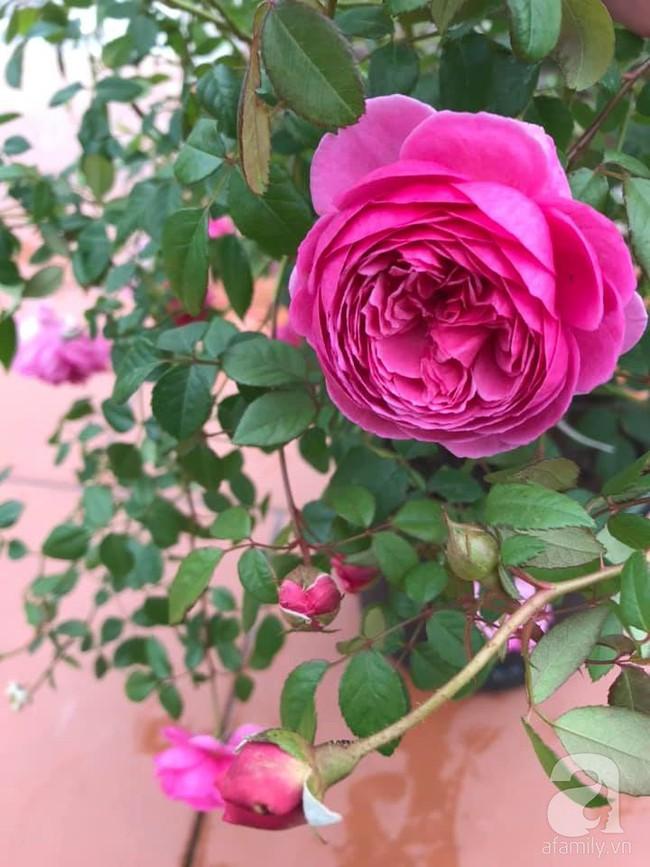 Người phụ nữ tận hưởng hạnh phúc trọn vẹn bên vườn hồng trên cao giữa lòng Hà Nội - Ảnh 13.