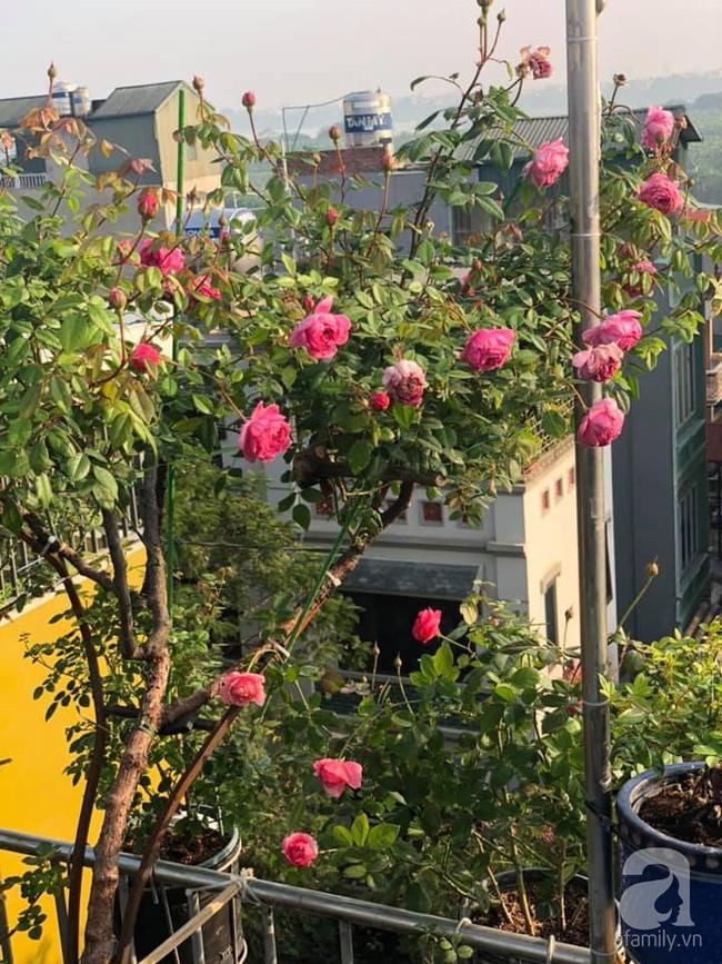 Người phụ nữ tận hưởng hạnh phúc trọn vẹn bên vườn hồng trên cao giữa lòng Hà Nội - Ảnh 12.