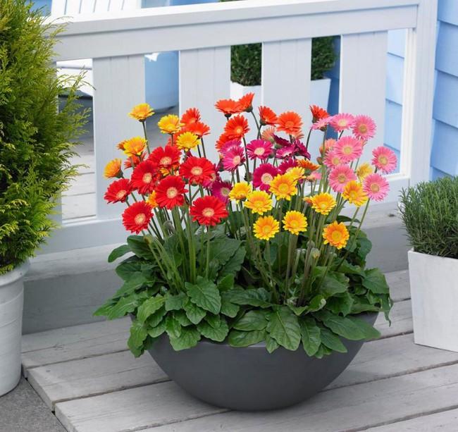 Những loại hoa vừa làm đẹp nhà vừa mang may mắn, tài lộc cho năm mới - Ảnh 7.