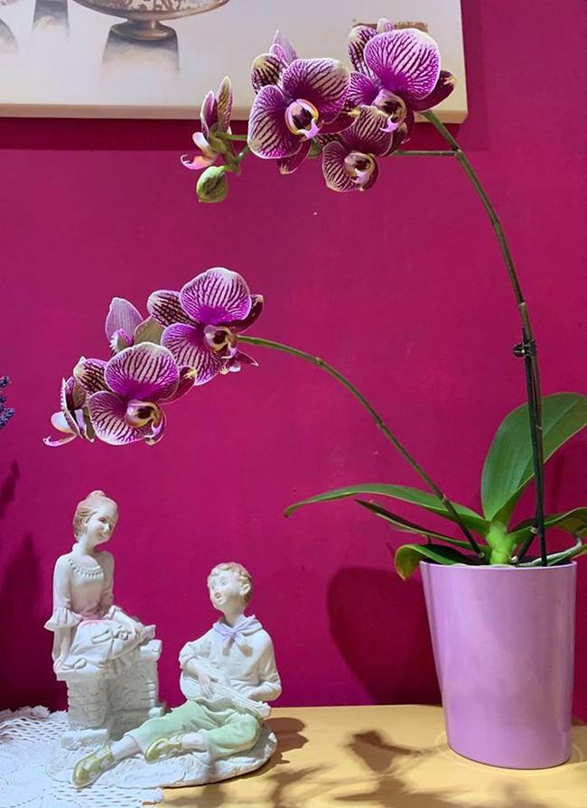 Những loại hoa vừa làm đẹp nhà vừa mang may mắn, tài lộc cho năm mới - Ảnh 5.
