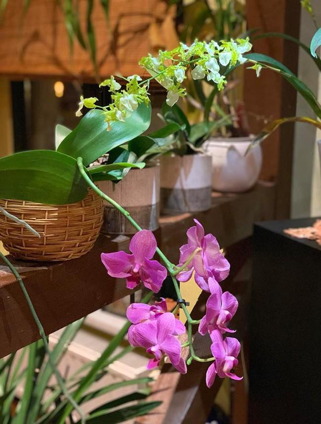 Những loại hoa vừa làm đẹp nhà vừa mang may mắn, tài lộc cho năm mới - Ảnh 4.