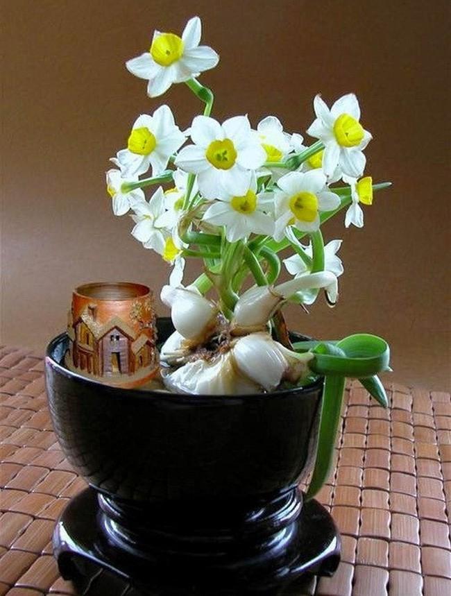 Những loại hoa vừa làm đẹp nhà vừa mang may mắn, tài lộc cho năm mới - Ảnh 8.